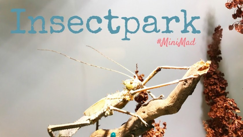 InsectPark. Minimad