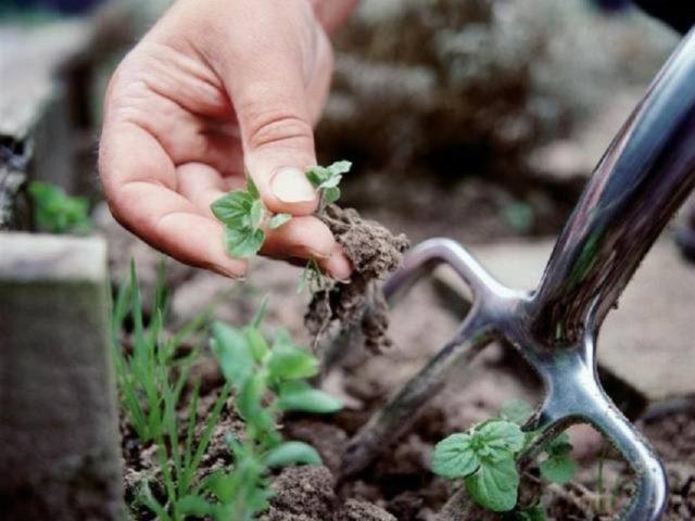 Как быстро и навсегда избавиться от мокрицы в огороде