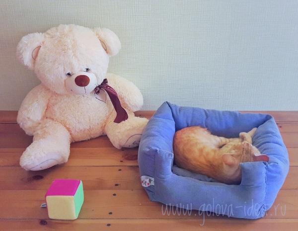 как сшить лежак для кошки