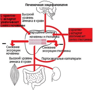 diakarbas ir hipertenzija aukščiausia hipertenzijos stadija
