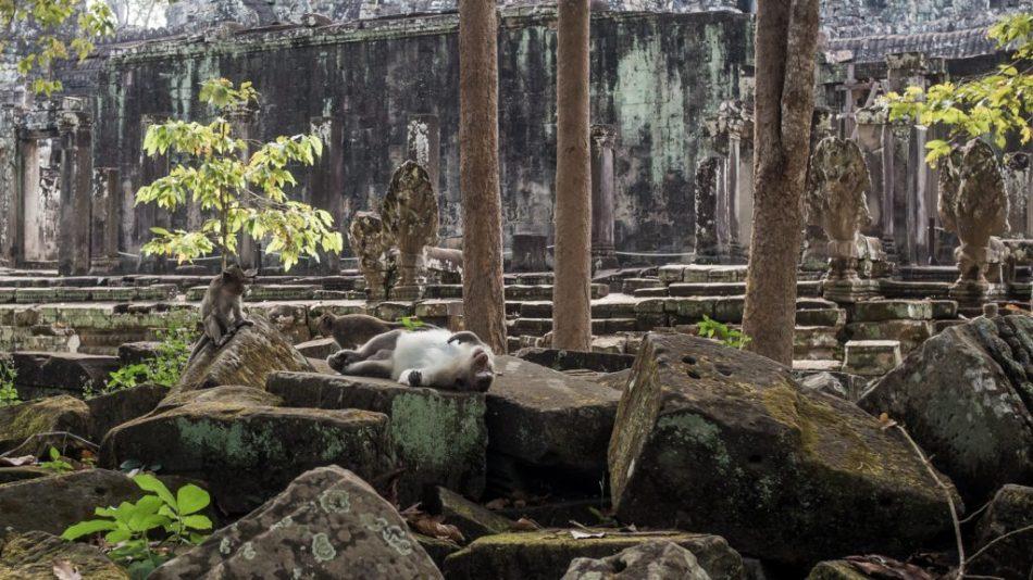 Angkor beer and snake wine will do this to you. Bayon Temple, Angkor Thom, Cambodia