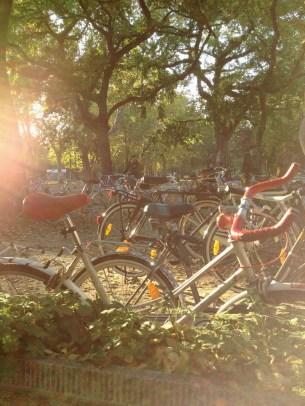 biciklis csendélet