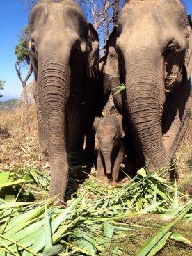 elephant8