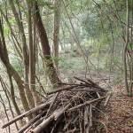 昆虫観察、竹とチェーンソー