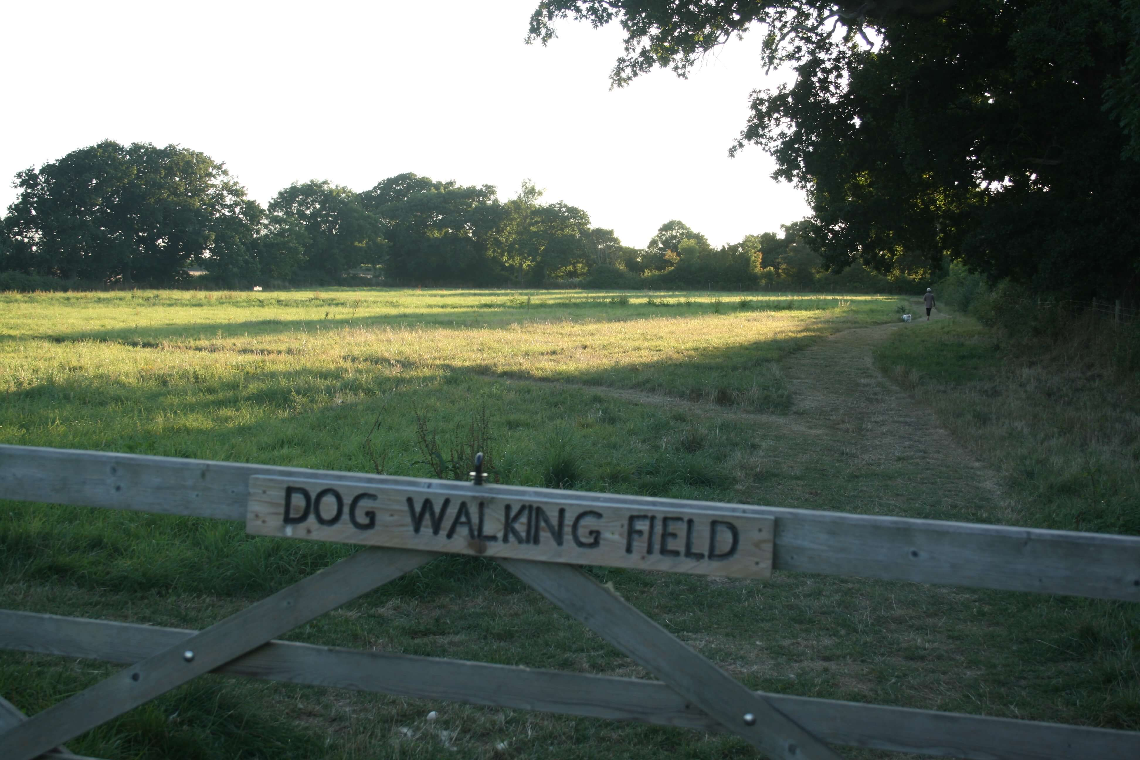 Dogs can run Free in our enclosed meadow.