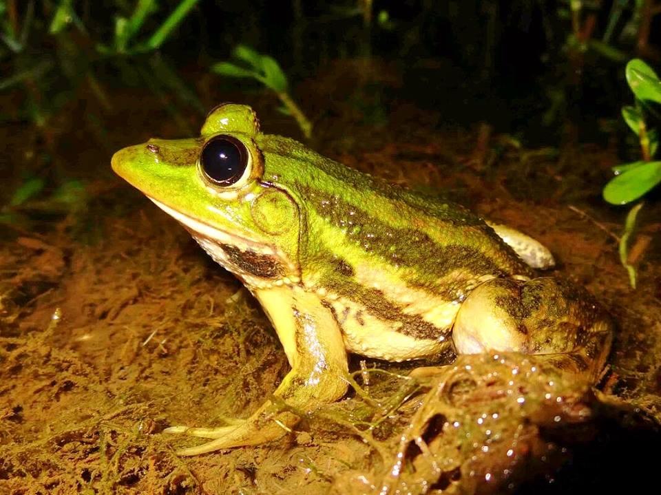 clp_frog_article_1_-_credit_naik_c_r.jpg