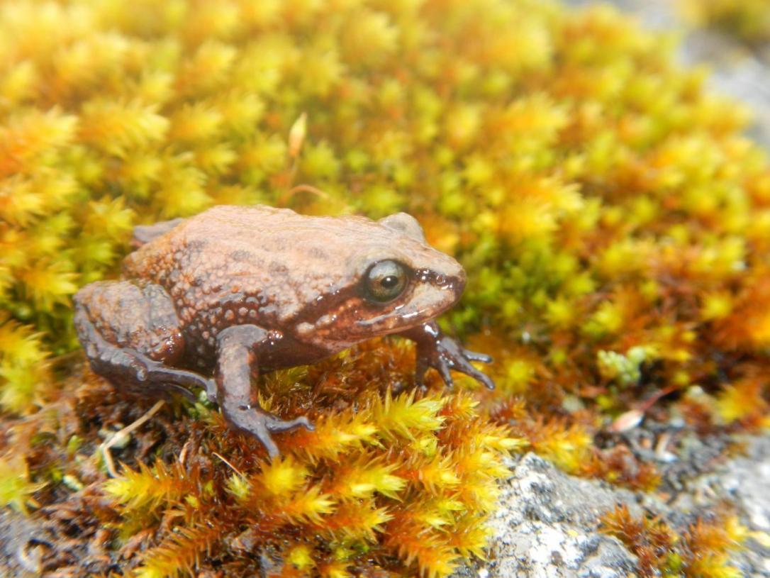 rubberfrog
