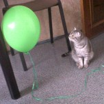 The cat was very surprised to find this GREEN floating thing I brought home after Women's Day