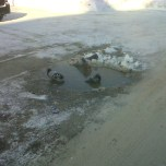 First signs of spring - pigeons sitting in WATER to keep warm!