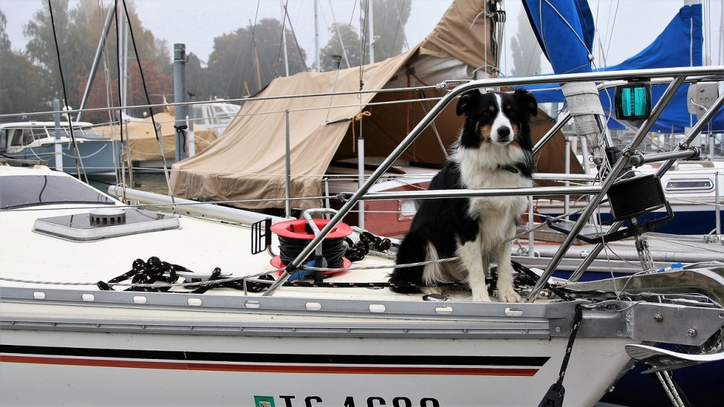Travelling by boat with your dog might require some planning