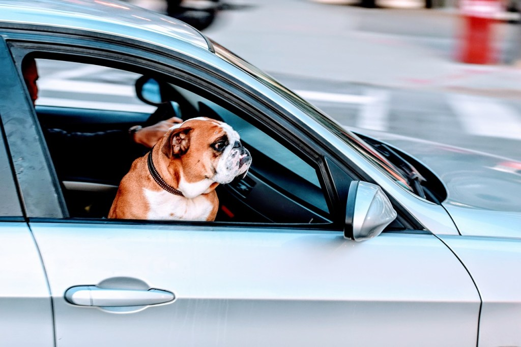 Travelling by car with your dog might be the best option