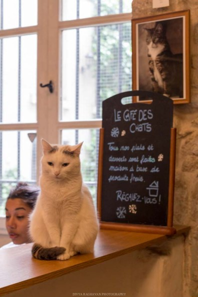 Le cafe des chats, Paris-7