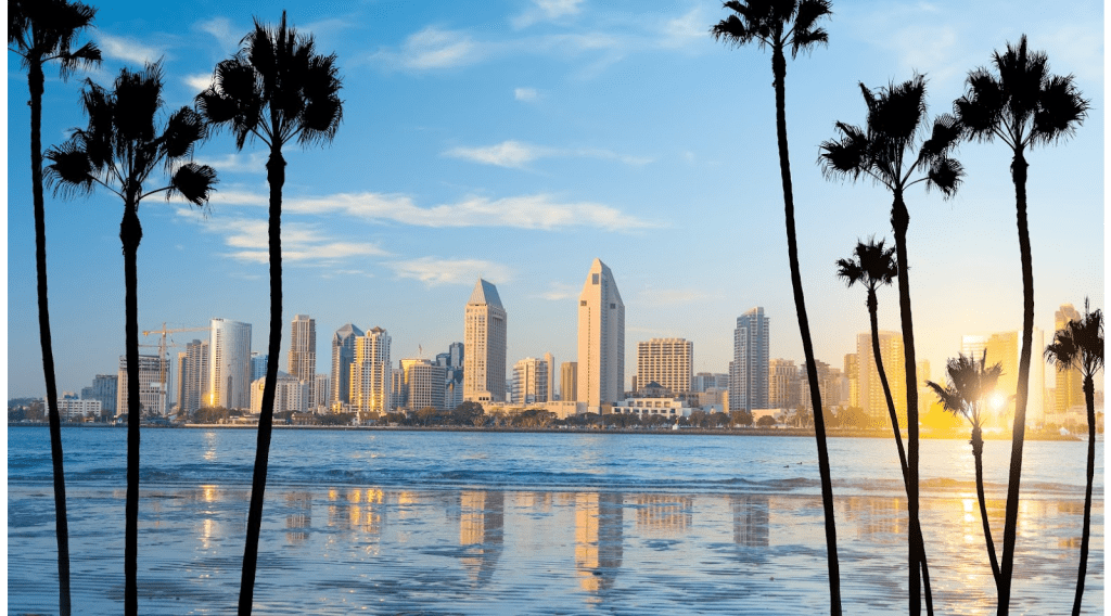 city scape view between palm trees