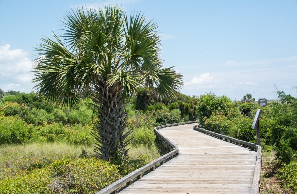 wooden boardwalk through grasses and palm trees