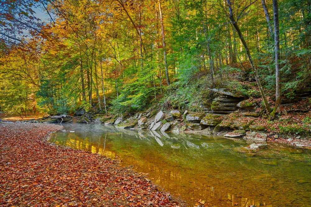water with fall leaves on the ground and a wall of rocks and trees
