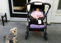 Uppa Baby Infant Car Seat Mesa
