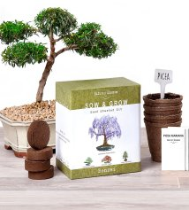 Non-Toxic Holiday Gift For Dad - Nature's Blossom Bonsai Garden Seed Starter Kit