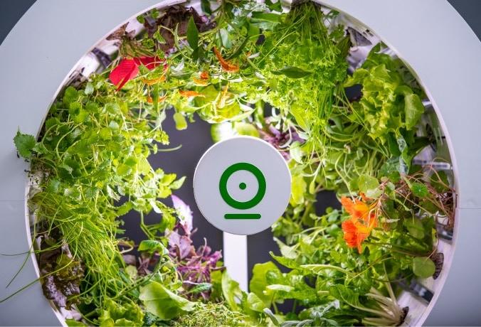 Indoor Garden - OGarden Smart Growing Vegetables