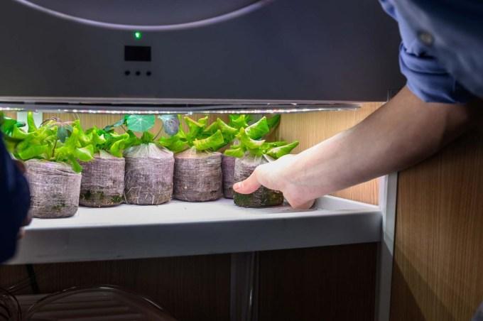 Indoor Garden - OGarden Smart growing seeds