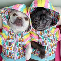 Non Toxic Dog Gifts - Frenchiestore Organic Dog hoodie