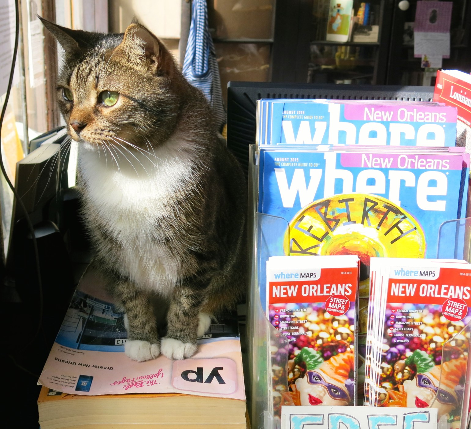 Juniper at her post in Beckham's Bookshop in the French Quarter. (Photo: Christopher Garland)