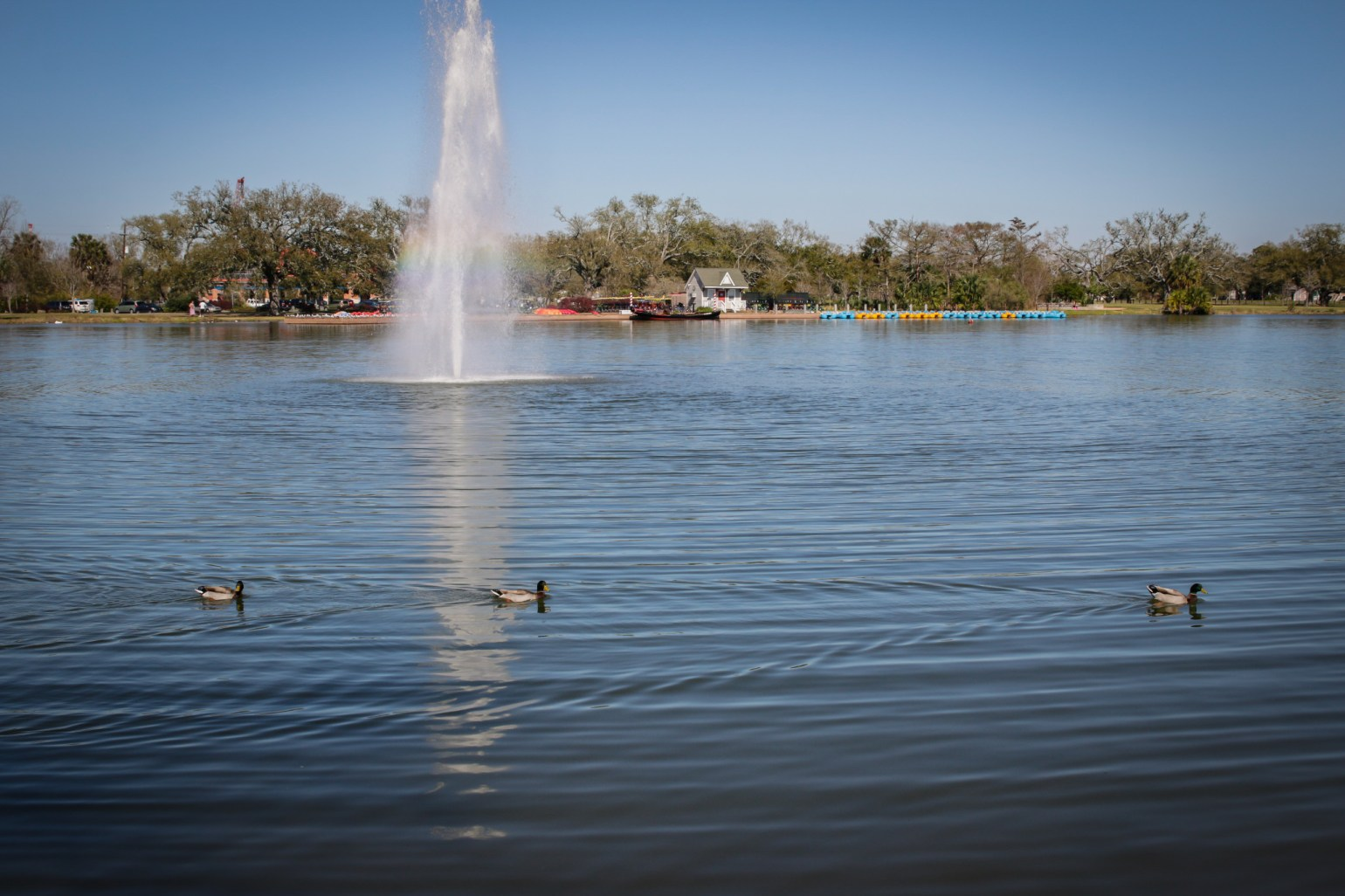 Big Lake in City Park will be full of rubber ducks this Saturday! Photo: Paul Broussard