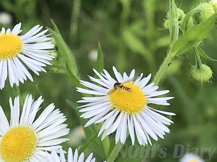 小さい蜂と花