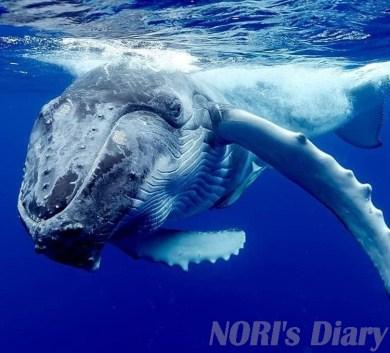 まつもとあきこ写真クジラ