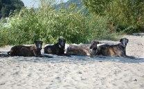 und alle 4 Herzenshunde!