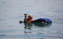 Mein Mini schwimmt brav mit auf der Luftmatratze :)