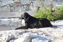 Pipi fast 14 beim Sonnenbaden!