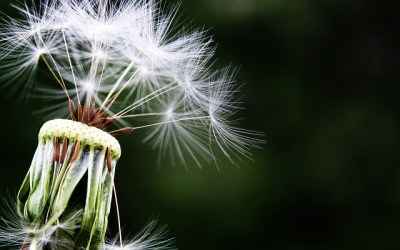 Allergy relief with the Four Rs of Functional Medicine