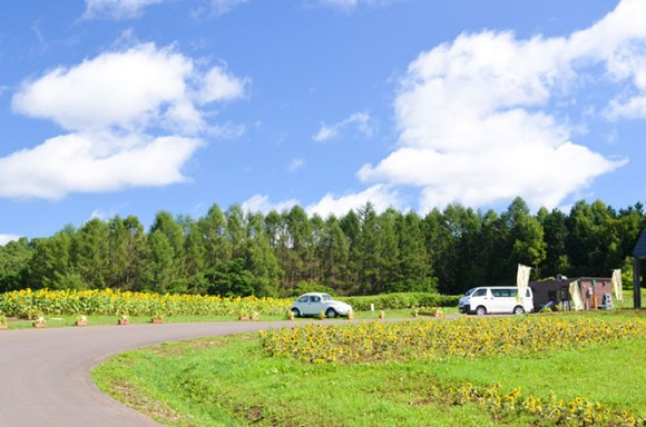 Sun Flower Fields, Nayoro, Sun Piller Venue