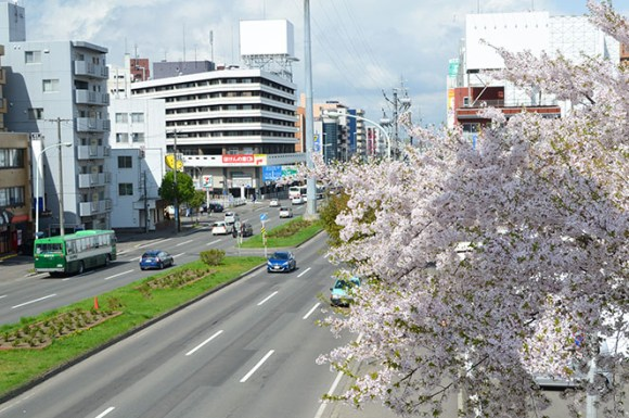 Cherry Blossoms Shiroishi Cycling Road in Sapporo