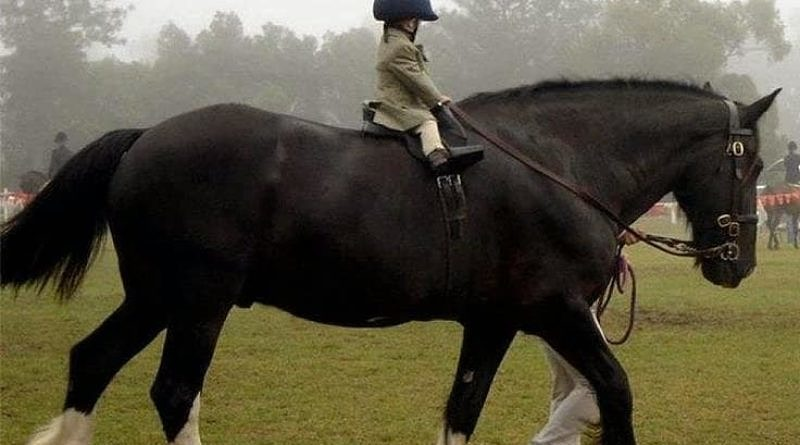 Should children learn to ride on horses or ponies? - Good ...