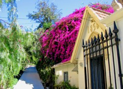 Colourful Spanish plants