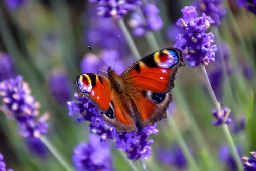 Butterfly signifies change