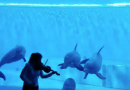 Violinist plays song from Disney's 'Moana.' Now watch the dolphins swim to the music