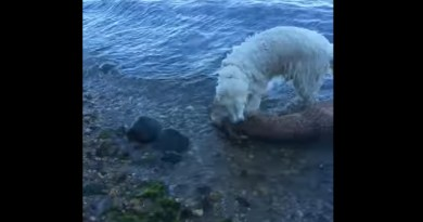 Video Captures Hero Dog's Rescue Of Drowning Baby Deer In Long Island Sound