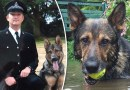 Hero police dog who almost died from horror stab wounds wins Animal of the Year award