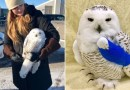 Owl Hit And Caught In SUV Survives