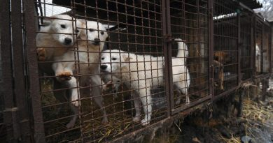 South Korean Court Outlaws Killing Dogs For Their Meat