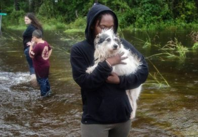 She Heard Their Cries And Couldn't Walk Away, So She Helped Save 18 Dogs In Kinston