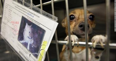 California Limits Pet Store Sales Of Cats, Dogs And Rabbits To Rescue Or Shelter Animals Only