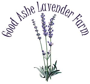 Good Ashe Lavender Farm