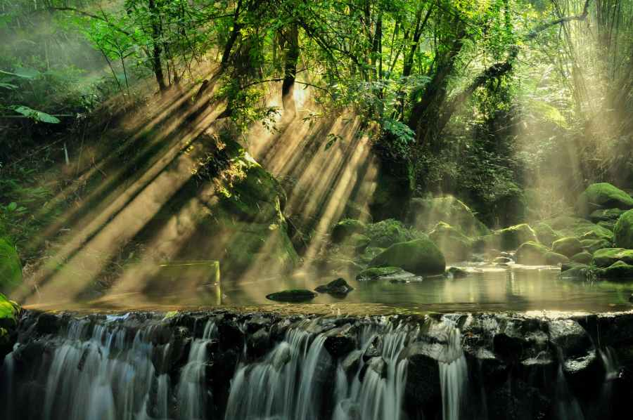 scenic view of rainforest