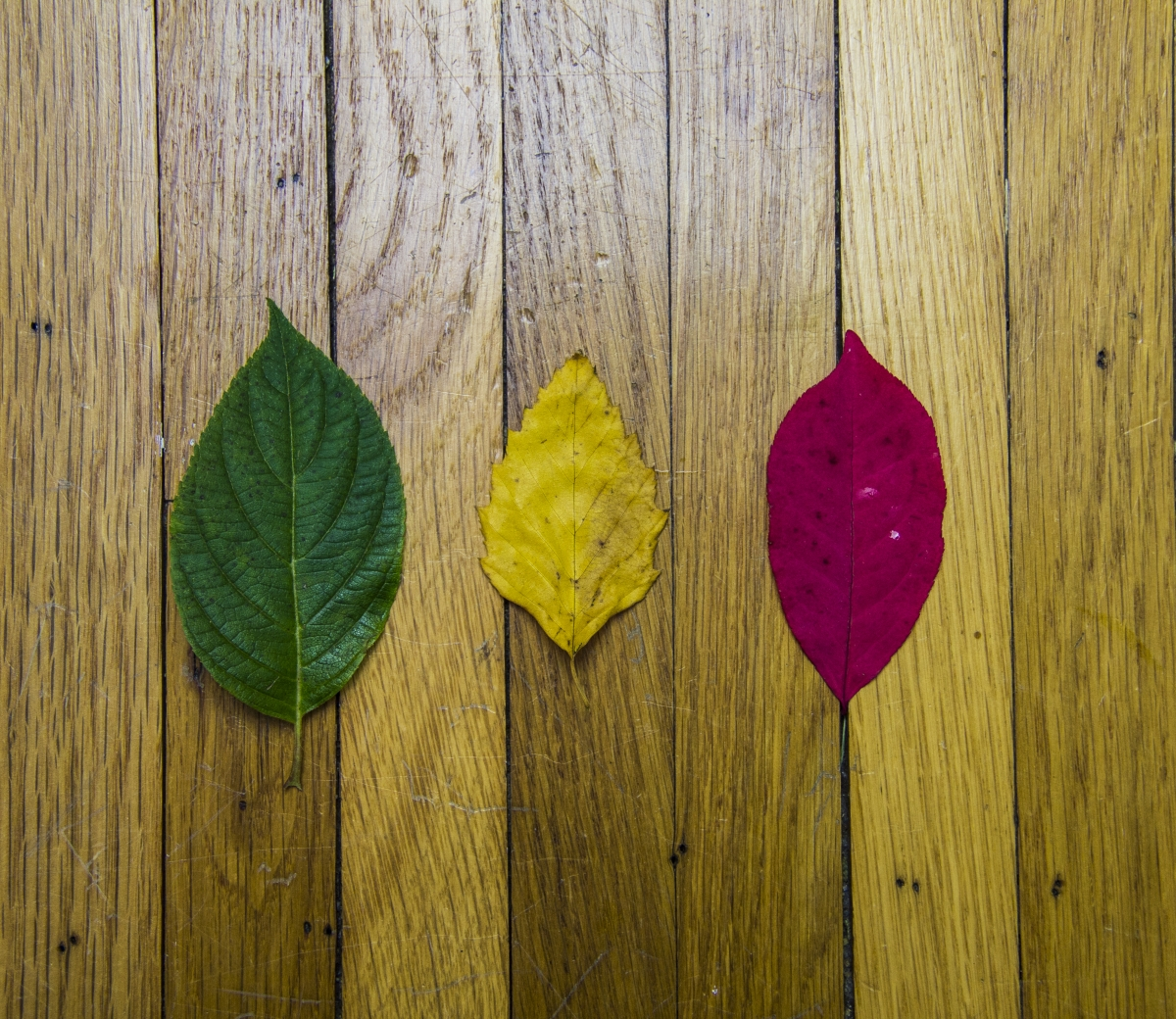 3 leaves - stages of csr