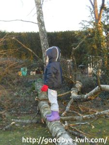Enfant sur arbre