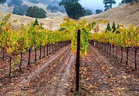 Bonterra vineyards at McNabb Ranch