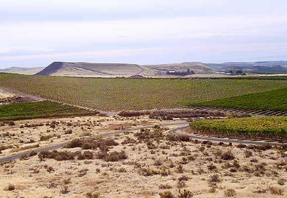 desert vineyards